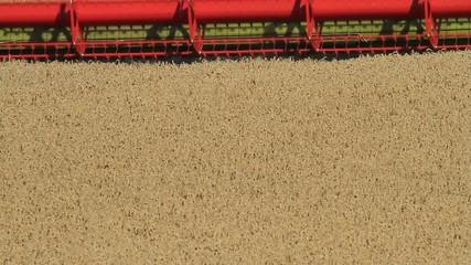 Mähdrescher nah bei der Weizenernte