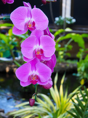 3 PINK ORCHIDS