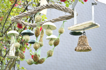 Different types of bird feeder