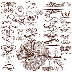 Vector set of calligraphic flourishes and ornaments