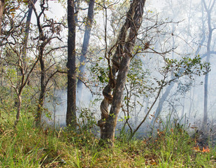 Wildfire  in Chitwan, Nepal