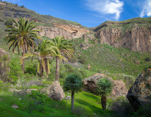Gran Canaria, Calder de Bandama after winter rains