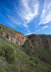 Gran Canaria, Caldera de Bandama after winter rains