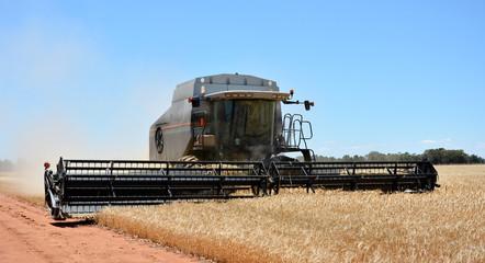 Mähdrescher bei der Getreideernte