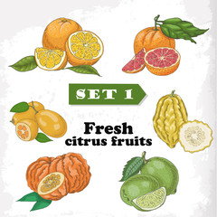 Set of Fresh citrus fruits