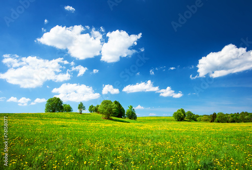 Staande foto Weide, Moeras Field with dandelions and blue sky