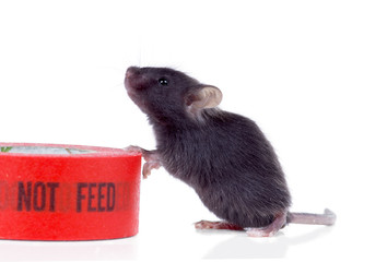 "Black hungry baby mouse next to the duct tape that says ""do not"