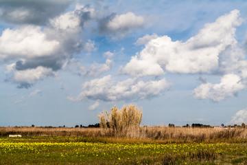 Palude e cielo con nuvole,