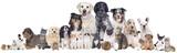 Fototapety Haustiergruppe
