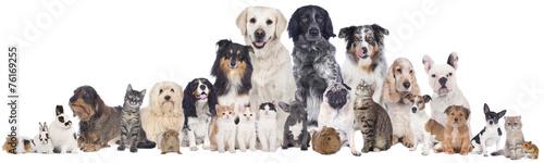 canvas print picture Haustiergruppe