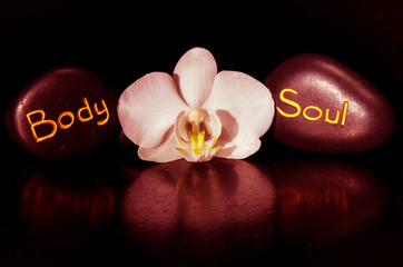 body word and soul and white orchid