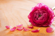 Pink rose petals and rose.