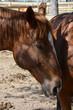 Obrazy na płótnie, fototapety, zdjęcia, fotoobrazy drukowane : horse profile