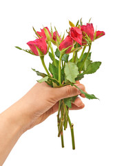 Hand holding a bouquet of red roses on a white background.