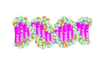 modello del DNA con la sua doppia elica