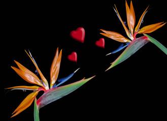 Flor Ave del Paraiso, Strelitzias, amor, San Valentín