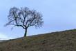 canvas print picture - Baum aud dem Hügel
