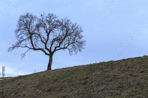 canvas print picture Baum aud dem Hügel