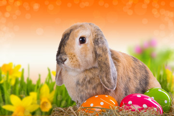 hase ostern