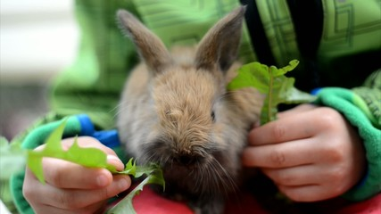 small Rabbit with Kid