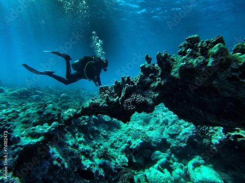 obraz lub plakat Koral