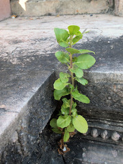 Plant little tree on old bricks wall background