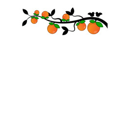 Branches of Orange in white background