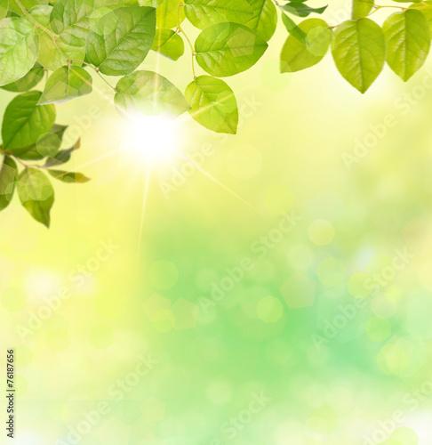 canvas print picture natur