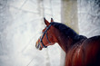 Portrait of a sports horse in the winter. - 76187821