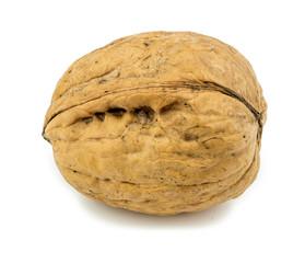 Macro closeup of unshelled walnut isolated on white