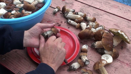 preparing edible mushroom fungi cep boletus on table