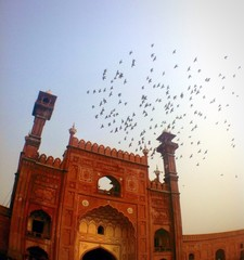 birds flying over a mosque