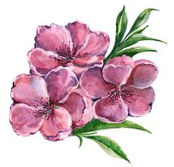 Peach flower, watercolor