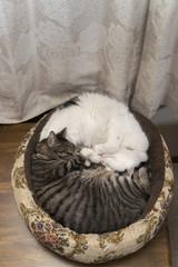 ネコ 二匹で寝る
