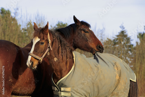 Leinwandbild Motiv Pferd zieht an Decke