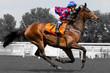 Rennpferd, Jockey, Pferd, Pferderennen, - 76197639
