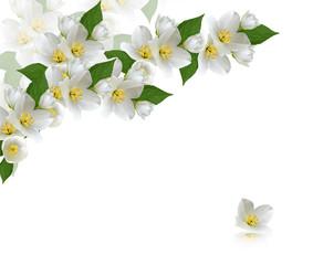 flowers jasmine