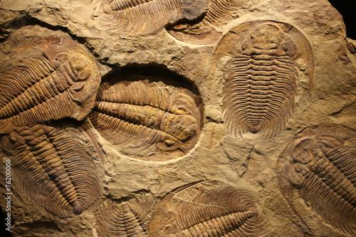 Leinwanddruck Bild fossil trilobite imprint in the sediment.