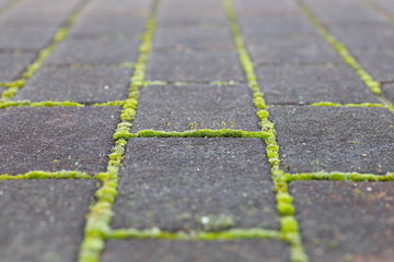 green moss growing from stone brick floor