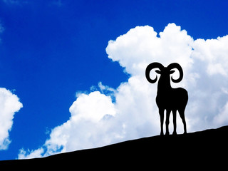 A sheep in the clouds sky background.