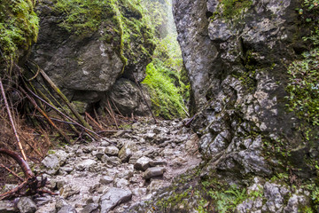 Ravine Cracow - Tatra National Park, Poland.