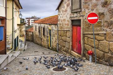 Alley with Pigeons in Vila Nova de Gaia, Portugal