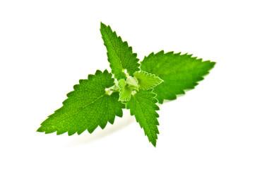 melissa leaves
