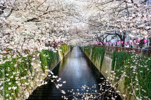 Zdjęcia na płótnie, fototapety, obrazy : tokyo, Japan at Meguro canal in the spring.