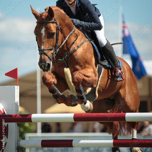 Equestrian - 76208887