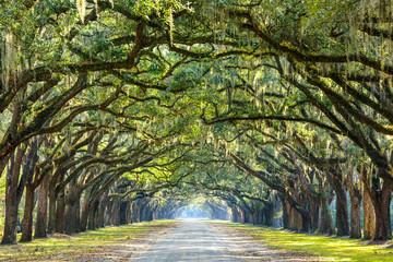 Polna droga wyłożona Oaks w Savannah, Georgia