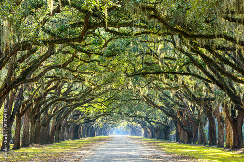 Leinwandbild Motiv Country Road Lined with Oaks in Savannah, Georgia