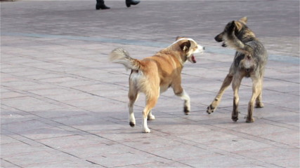 Two dogs are playing