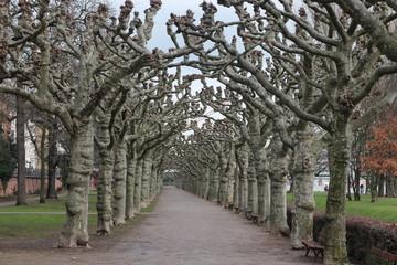 Einsame Baumallee im Park
