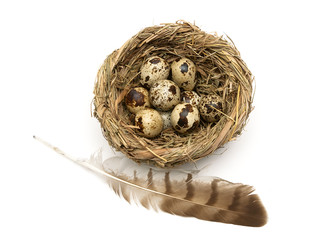 feather of a bird and eggs in a nest isolated on a white backgro